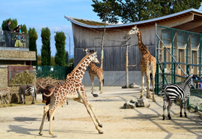 Rapperswil Kinderzoo